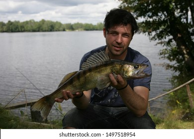 Ogre, Latvia - august 12, 2012: A pike-perch, zander caught in the hands of a fisherman