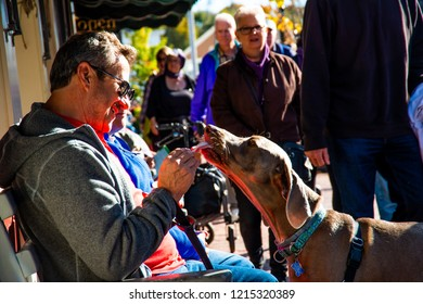 Ogunquit, Maine USA: October 21st, 2018: A man feeds his dog ice cream with a spoon while sitting on a public bench in downtown Ogunquit during a rare hot day in October.