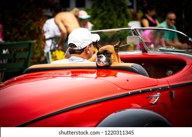 "Ogunquit, Maine USA: September 25th, 2018: A man in a vintage convertible car is taking his boxer dog for a ride on a fall day. The dog faces backwards and looks relaxed as if to say "" life is good."""