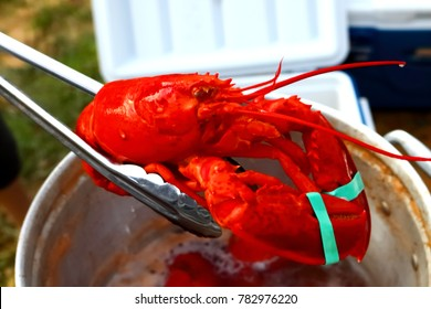 Ogunquit, Maine, USA-July 4, 2017: A freshly boiled lobster is served right out of the lobster pot on the 4th of July celebration in Ogunquit.  Maine is known worldwide for their fresh caught lobster.