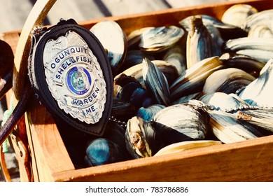 Ogunquit, Maine, USA-November 12, 2017: An Ogunquit Shellfish Warden badge sitting on top of a bushel of freshly harvested Maine clams.