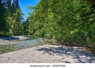 OHANAPECOSH River and pebble beach Grove of the patriarchs, Ohanapecosh, Mount Rainier National Park, Washington
