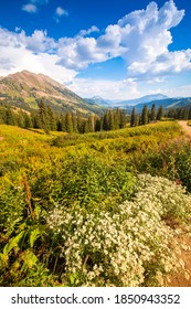 Ohio Pass in Colorado, with wild flowers in foreground and Rocky Mountain Range in the background, Colorado, USA