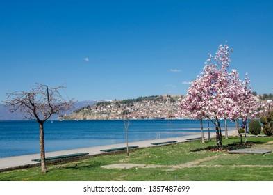 Ohrid Lake - Macedonia - view toward old town Ohrid - Magnolia tree in foreground