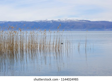 Ohrid Lake and Reeds