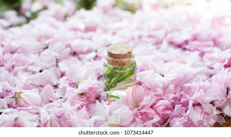 Oil. Bottle. Glass of perfumes. Green leafs. Spring tree with pink flowers. Pink flowering tree over nature background / Spring tree / Spring Background.