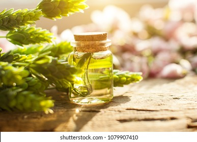 Oil bottle. Green flowers. Aroma. Spring. Wooden table. Sunshine. Bottle with oil. Green leafs. Blur background.