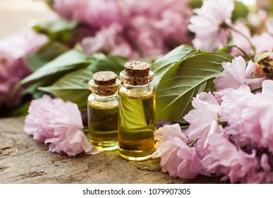 Oil bottles. Wooden table. Green leafs. Perfumes. Stately flowering Japanese cherry. Sakura. Flowering Japanese cherry. Side view. Home.