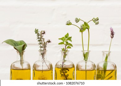 oil essential herbs in glass bottles of echinacea , radishes flower, lavender and oregano