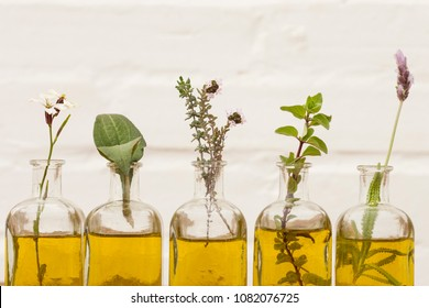 oil essential herbs in glass bottles of thyme, echinacea ,arugula flower, lavender and oregano
