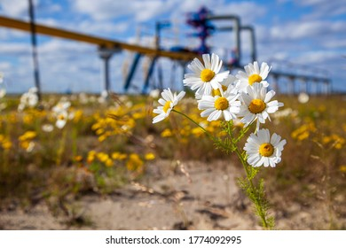 Oil, gas industry. Group wellheads and valve armature, Gas valve, Gas well of high pressure, wild daisies against a background of a gas well