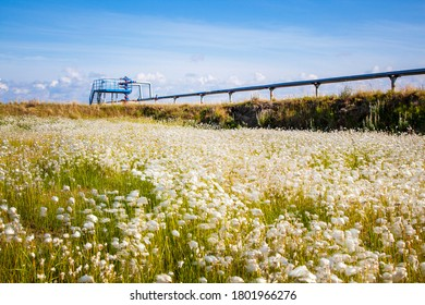Oil, gas industry. Group wellheads and valve armature, Gas valve, Gas well of high pressure against a background of white fluffy flowers