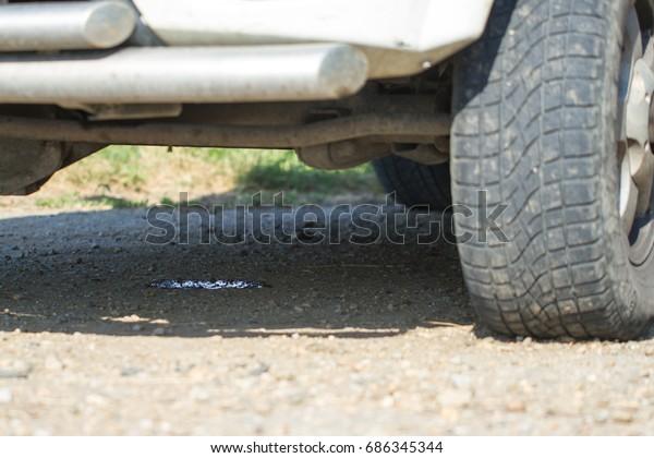 Oil Leak In Car >> Oil Leak Car Stock Photo Edit Now 686345344