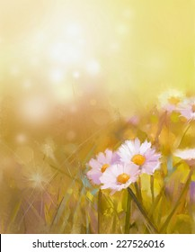 Oil painting white daisy-chamomile flowers field at sunrise.Spring Wildflower season, soft color and blur background
