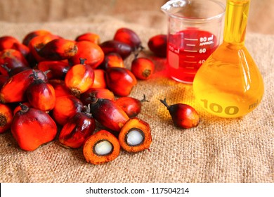 Oil Palm fruits with palm oil