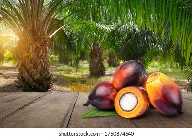 Oil Palm fruits on wooden table with palm tree  background.