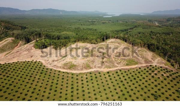 Plantación de palma de aceite, deforestación, selva tropical. Foto aérea de daños ambientales en el Sudeste Asiático