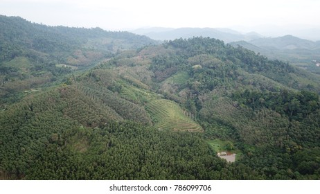 Oil palm plantations and rainforest in Thailand