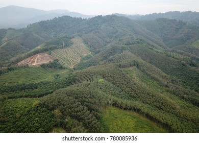Oil palm and rubber plantations aerial landscape view in Thailand