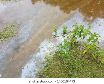 oil pollution in muddy water with plants