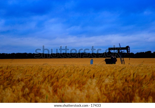 An oil pump in the middle of a wheat field.