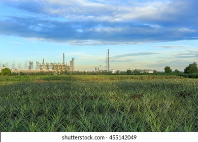 Oil refinery plant on pineapple field with blue sky. Can for energy industry background.