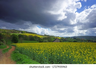 Oil seed rape fields in full blossom under a very stormy sky, The Cotswolds, Gloucestershire, UK