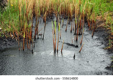 Oil spill on the surface of the pond - environment pollution. Watter drops on the petroleum surface.