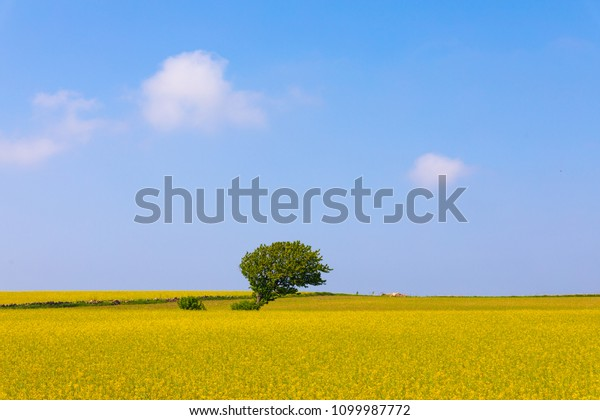 Oilseed nature feild