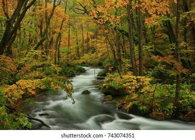Oirase Gorge in autumn