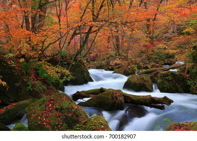 Oirase stream in autumn.