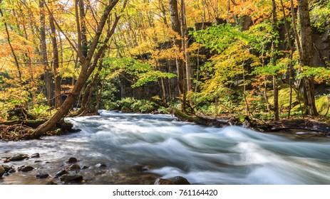Oirase Stream in autumn at Towada Hachimantai National Park in Aomori, ,Tohoku, Japan