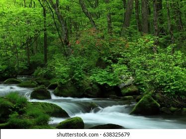 Oirase stream in summer