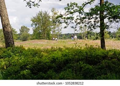 oisterwijk, noord brabant, netherlands, 08-18-2016, walking in nature reserve the kampina