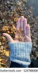 ok leaf in female hand