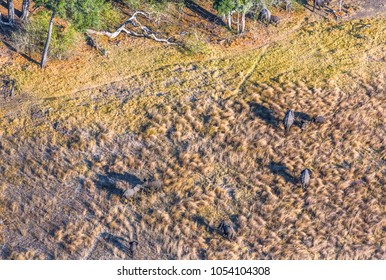 Okavango delta (Okavango Grassland) is one of the Seven Natural Wonders of Africa. A herd of elephants goes to the watering hole (view from the airplane) - Botswana, South-Western Africa