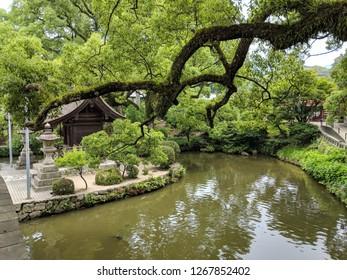 Okayama Korakuen Garden.  It is one of the Three Great Gardens of Japan, along with Kenroku-en and Kairaku-en. Korakuen was built in 1700 by Ikeda Tsunamasa, lord of Okayama.