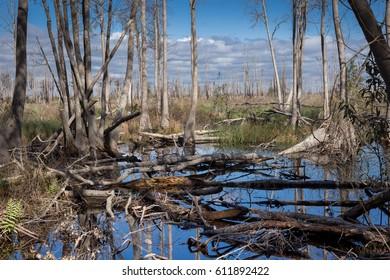Okefenokee Swamp, South Georgia