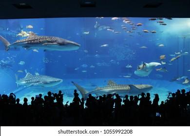 Okinawa Aquarium People