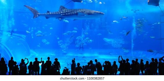 Okinawa Churaumi Aquarium,Japan 21.04.2018, Many tourists admire the fish herd under tank.