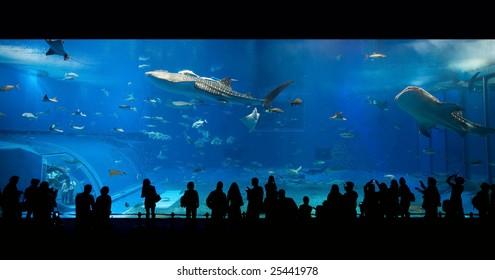 Royalty Free Huge Fish Tank Stock Images Photos Vectors