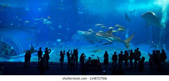 Okinawa, Japan - February 2018, 2 : Okinawa Churaumi Aquarium is the most famous tourist spot of Okinawa Island among tourists and locals which have shown wheal sharks in the main tank.