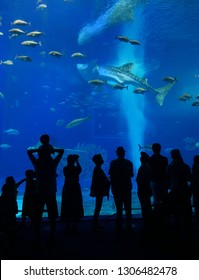 Okinawa, Japan - July 2018, 13 : Okinawa Churaumi Aquarium is the most famous tourist spot of Okinawa Island among tourists and locals which have shown whale sharks in the main tank