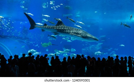 Okinawa-November 11, 2018 : Silhouettes of people and giant whale shark of fantasy underwater in Oceanarium