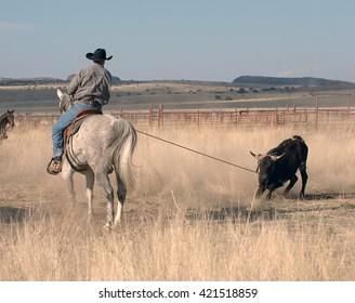 Oklahoma Calf Roping