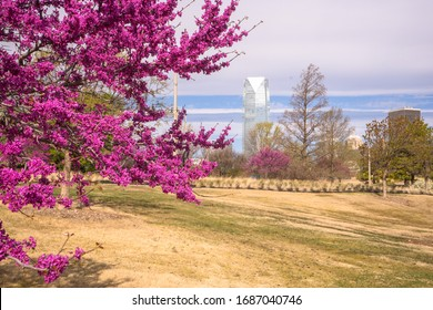 Oklahoma City, Oklahoma/USA - March 27, 2020: Oklahoma city skyline with redbud trees in bloom from park near Brickhouse district.