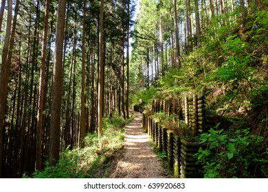 """""""Okutama therapy road"""" aimed at forest therapy, Okutama, Tokyo, Japan. The road is covered with woodchips for comfortable walking. Images for forest therapy."""