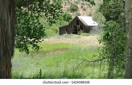 An old abandoned barn in a California oasis
