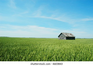 old abandoned barn in wheat field