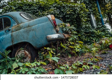The old abandoned car was overgrown with vegetation
